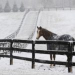 Horsing Around On A Snow Day!