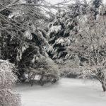 Snowy Towson