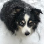Snow Dog Gil: From Brenda