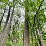 Welcome to Oregon Ridge Nature Park!