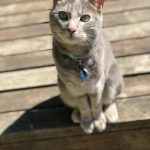 IMG_0124: Calvin the Cat