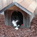 Joey: Joey loves his cathouse