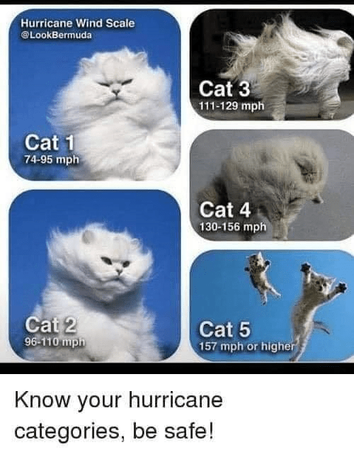 hurricane cat meme