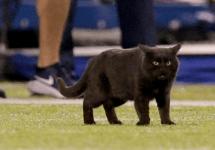 black cat metlife stadium on field