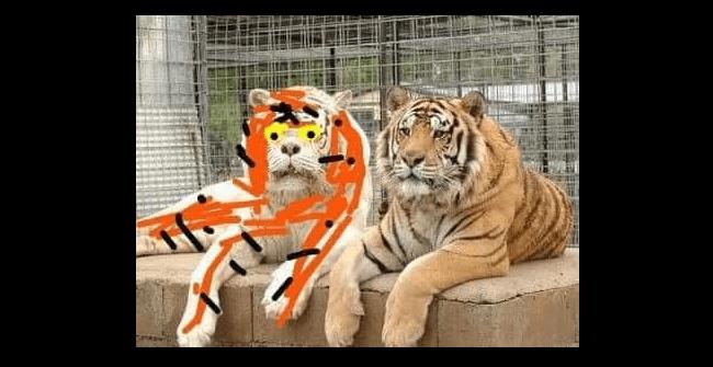 Funny Big Clemson Mascot 102.1 Memes | KYBG-FM