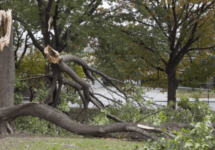 downed tree from hurricane